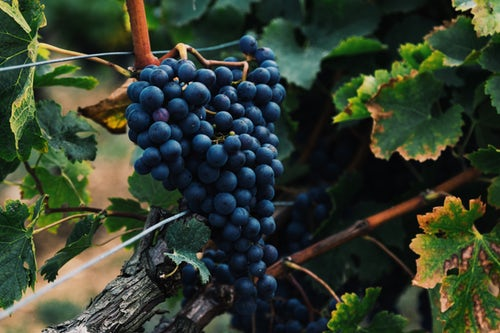 La Vigneronne recrute